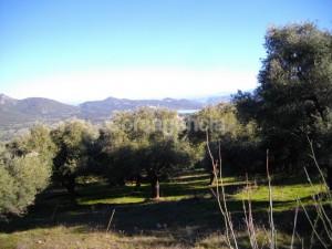 Terrain constructible plaine du Regino à Muro en Balagne