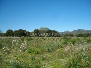 Terrain immobilier ile rousse for Frais notaire terrain constructible