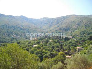 Terrain constructible de 5000 m2 arboré avec de nombreux oliviers, Ville di Paraso balagne corse
